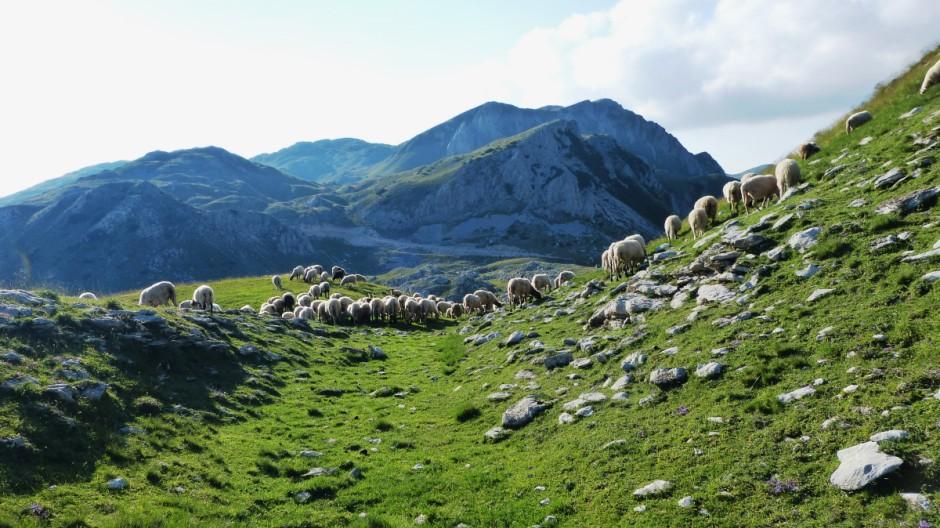 Die Via Dinarica ist ein über 2000 Kilometer umfassendes Fernwanderwegenetz in den Dinarischen Alpen -- für die Reise.