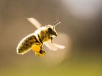 Bienen sind unterwegs