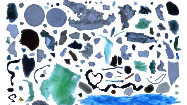 Plastikmüll in den Ozeanen Umweltverschmutzung