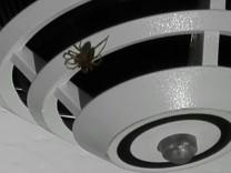 Spinne mit Brandmelder