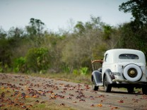 A man driving a vintage car reacts as he passes by crabs crossing a highway on their way to spawn in the sea in Playa Giron, Cuba