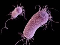 Antibiotikaresistente Bakterien