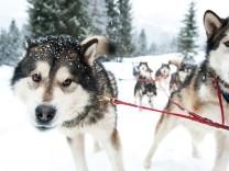 Beate Rhomberg fotolia Hundeschlitten groß