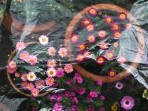Warum die Eisheiligen für Gärtner eine Rolle spielen