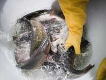 Birnbaum's Fischzucht