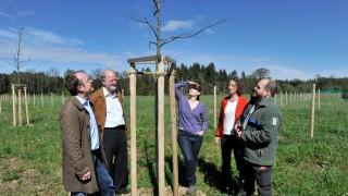 Weßling:Kompensationsmaßnahmen und Artenschutz Umgehungsstrasse ST2068