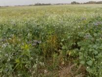 Biodiversität, Blumenwiese in Poing
