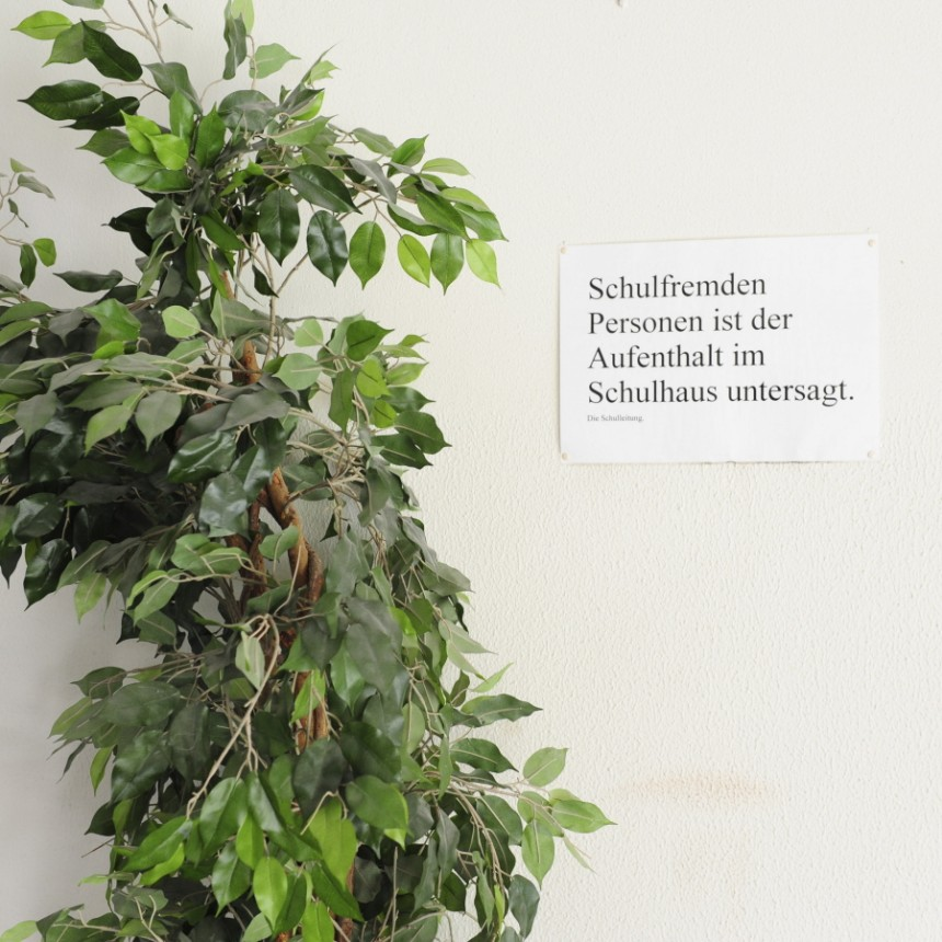 Allergien Attacke Vom Gummibaum Geld Suddeutsche De