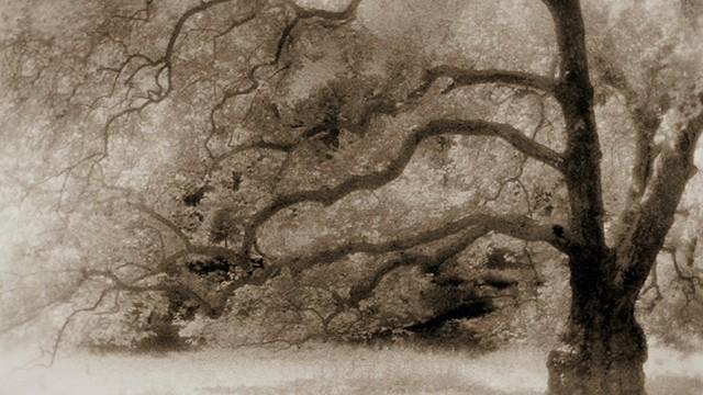 Baum in Cerisy La Salle, Frankreich, von Alexandra Vassilikian,