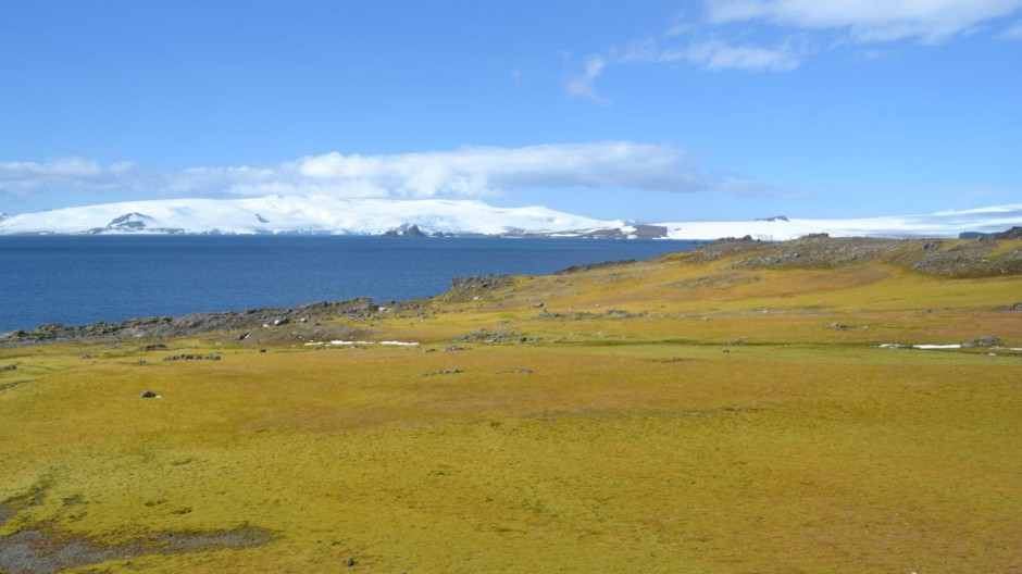 This photograph shows Green Island moss bank with icebergs in background.