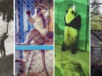 Captive Cam