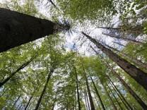 Nationalpark Bayerischer Wald; Bayerischer Wald