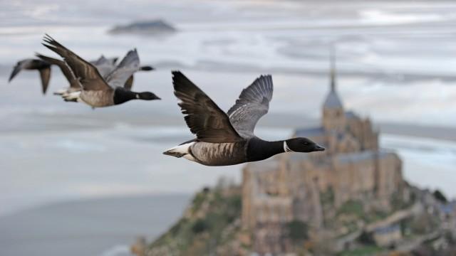 Abenteuer Erde: Die fantastische Reise der Vögel