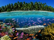 Tropical coral reef Fiji South Pacific Ocean Tropical coral reef Fiji South Pacific Ocean PUBLIC
