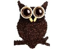 Coffee owl; Eule
