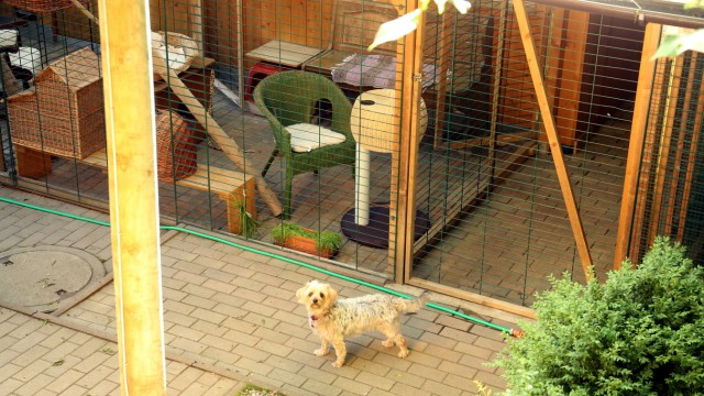 Maisach: Tierauffangstation Überacker