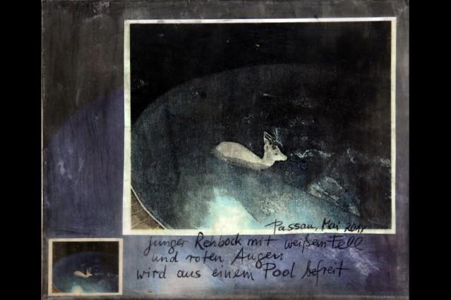 Kunstwerk auf Schwarz für Ipad _ Hilde Seyboth 'Weisser Rehbock, nachts im Pool'
