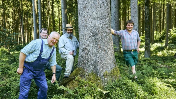Staatspreis Waldbewirtschaftung  Steingau