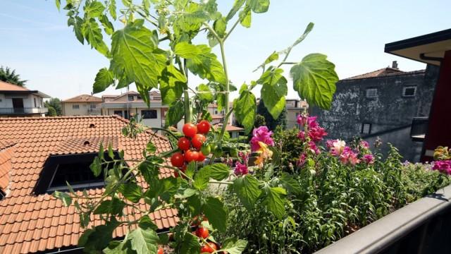 So Werden Obst Und Gemüse Auf Dem Balkon Ein Erfolg Stil