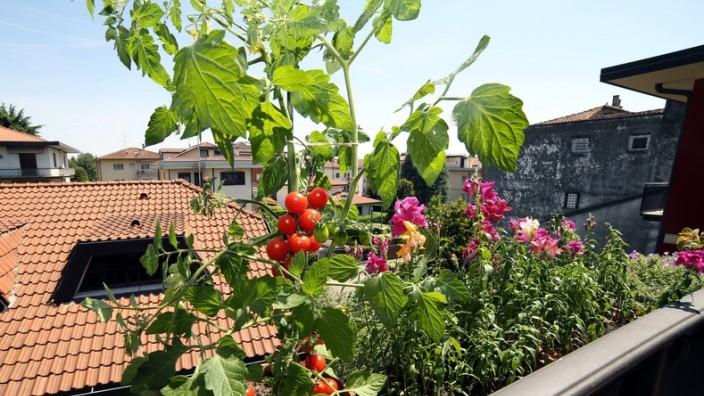 Turbo So werden Obst und Gemüse auf dem Balkon ein Erfolg - Stil UH65