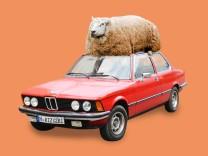 Hammel auf BMW