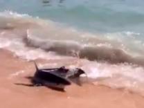 A shark is seen at the shore at Playa de Palma beach, in Palma de Mallorca