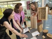 Bruck: Wildbienen-Ausstellung im Landratsamt