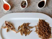 Insekten als Nahrungsmittel - Heuschrecke, Zophoba, Mehlwurm