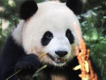Das Pandawunder von Berlin
