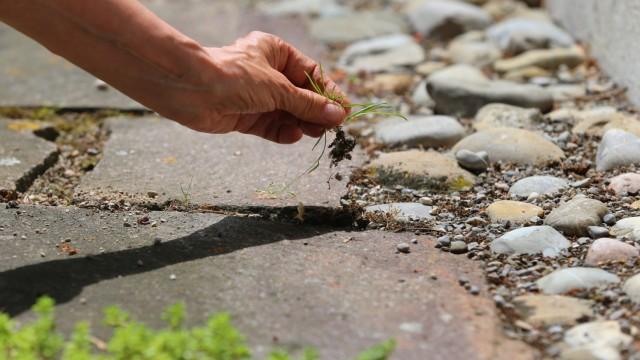 Unkraut auf Hofeinfahrt: Mittel gegen das unerwünschte Grün