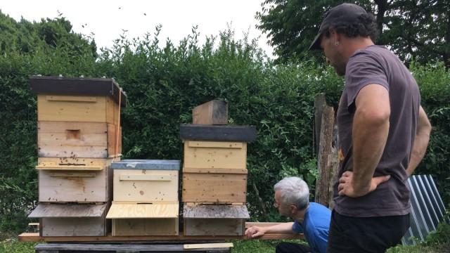 Bienen Bienen