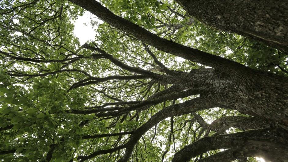 Garten Bäume