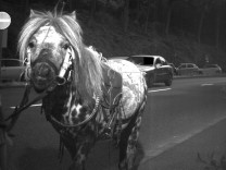 Pferd läuft in Blitzer