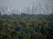 The Wider Image: Rainforest in the city