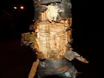 Baum Axt