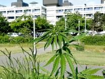 cannabis_jetzt