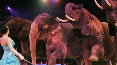 Stadtleben Skandal um Circus Krone
