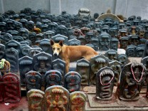 A stray dog stands amidst consecrated idols of snakes during the Hindu festival of Nag Panchami, which is celebrated by worshipping snakes to honour the serpent god, inside a temple on the outskirts of Bengaluru