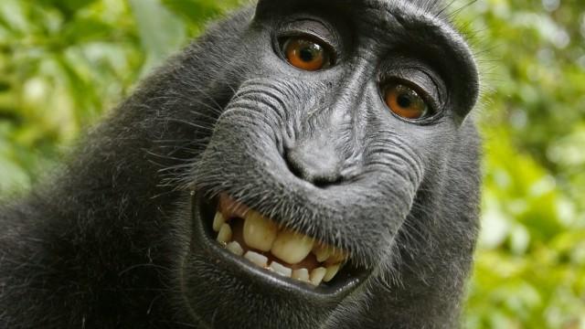 Tierschutz Rechtsstreit um Affen-Selfie