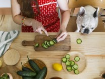 French bulldog watching woman cutting cucumber on table model released Symbolfoto property released