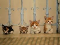 'Kedi - Von Katzen und Menschen'
