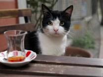 Kinostart - 'Kedi - Von Katzen und Menschen'