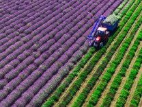 Lavendel Provence Frankreich France Ernte