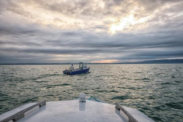 Wasser Zu Sauber Bodenseefischer Kämpfen Um Existenz Bayern