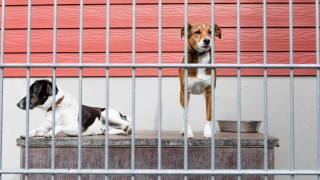 Tierheime in finanzieller Not