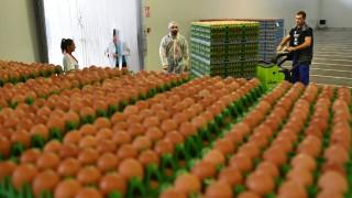Lebensmittelskandal Fipronil-Skandal