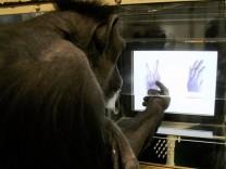 """Schimpansen können ´Schere, Stein, Papier"""" spielen"""