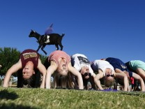 Yoga mit Ziegen