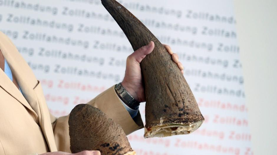 Nashorn-Hörner