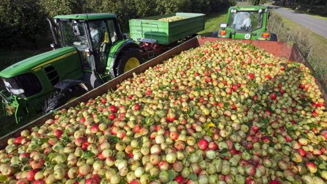 Maschinelle Apfelernte beginnt